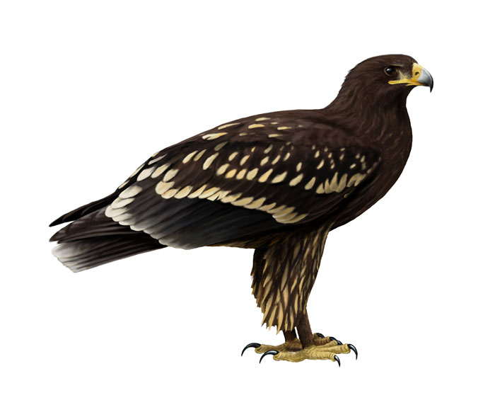 Orlik Ptak Jakich Mało